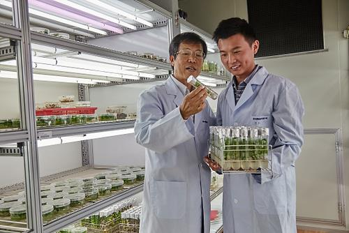 Dr. Kwak Sang-soo (left) and his advisee check the growth of genetically-modified poplar with a tolerance for environmental stress.