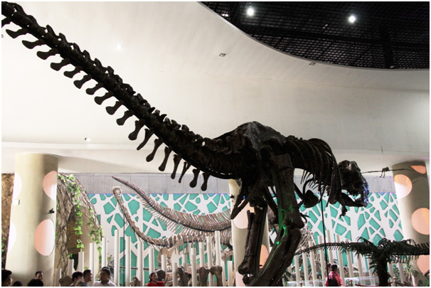 The museum Zhucheng Dinosaur Cubic displays 48 restored dinosaur skeletons.