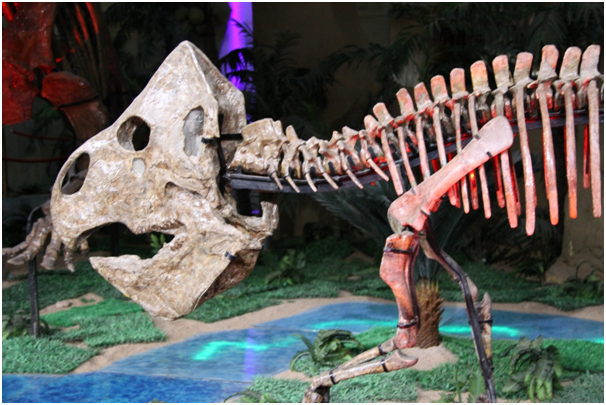 The museum Zhucheng Dinosaur Cubic displays 48 restored dinosaur skeletons