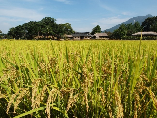 The decline in rice consumption and the rice oversupply led the government to donate rice to Myanmar and Cambodia.
