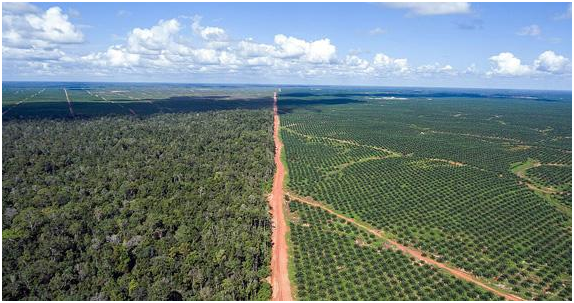 The site for PT BIA, Posco Daewoo's Indonesian palm oil plant. On the left is a lush tropical forest, but on the right, trees have been completely cut off. Posco Daewoo has destroyed about 82 million pyung (27.239 hectares) of tropical rainforest.